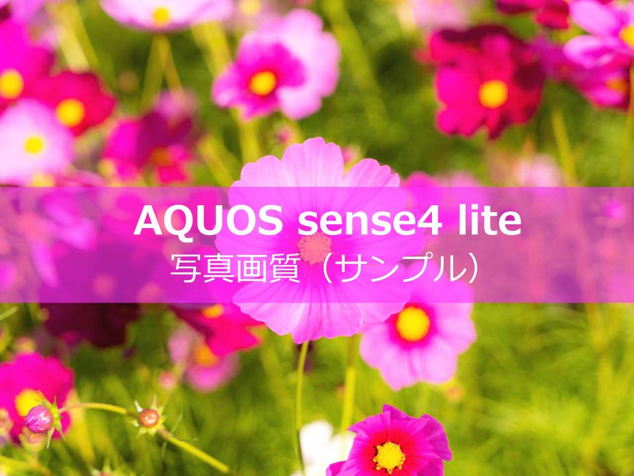 AQUOS sense4 liteで撮影した写真